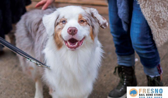 Dog Bite Laws In California