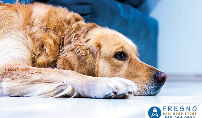 Leaving Your Dog At Home Means You Won't Face Jail Time