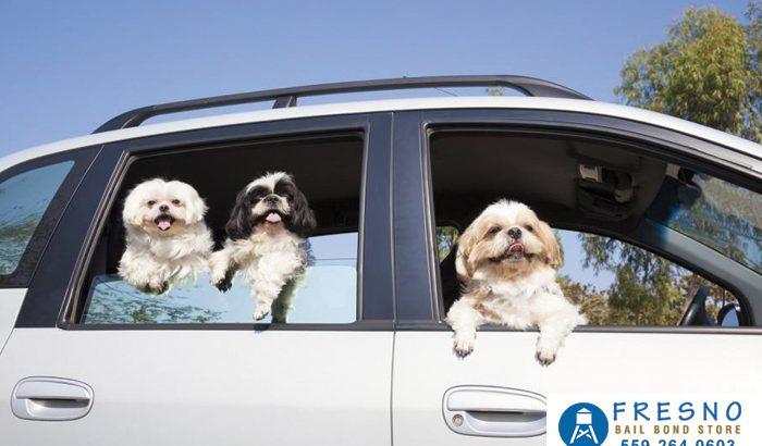 No Pets While Driving